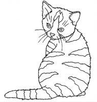 chat a imprimer gratuit