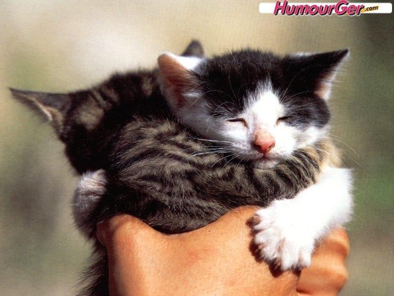 Résultat d'images pour gif chaton mignon