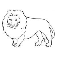 dessin lion facile