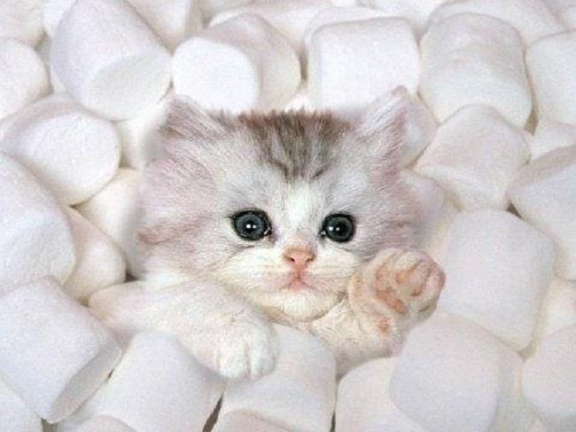 Image chaton trop mignon - Image de chatons trop mignons ...