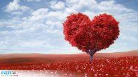 image coeur amour