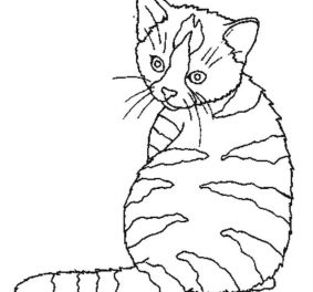 Image de chat a imprimer gratuit