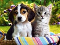 image de chat et chien mignon