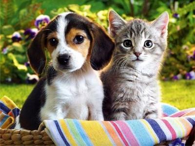 Image de chat et chien mignon - Image de chat mignon ...