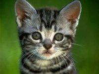 image de chats
