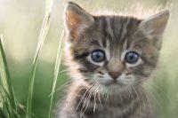 images de chaton