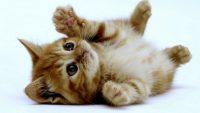 images de chats mignons