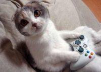 images de chats rigolos