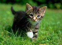 photo d un chat