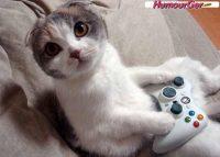 photo de chat rigolo