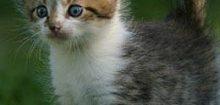 Photo de chaton a imprimer
