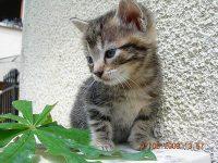 photo de chaton a vendre