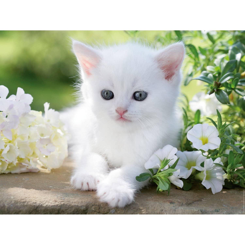 Photo de chaton blanc - Photo de chaton rigolo ...