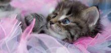 Photo de chatons