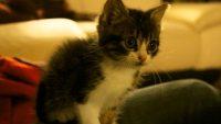 photo de petit chat