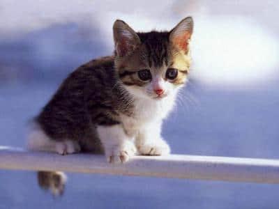 Photo de petit chaton - Photo de chaton rigolo ...
