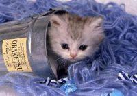 photos de chatons