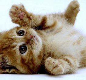 Photos de chats mignons