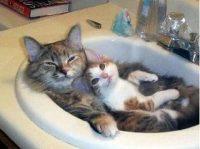 photos de chats rigolos
