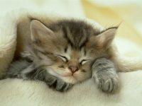 photos de petit chaton