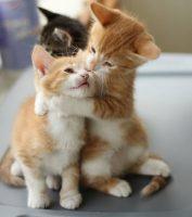 photos de petits chats