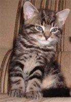 voir des photos de chats